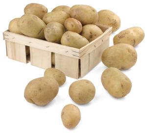 Krompir mladi SLO
