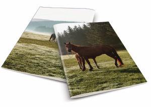 Zvezek A4 črte konji