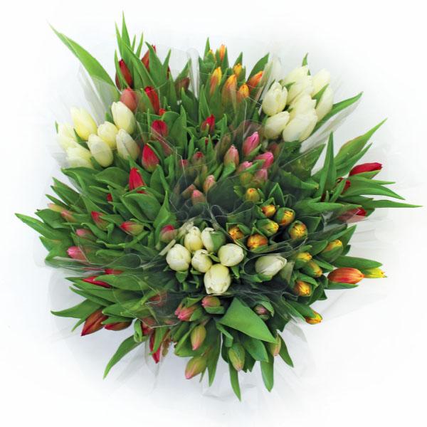 Šopek tulipanov, različnih barv, 10 stebel
