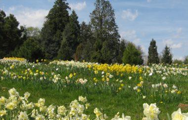20 % popust pri nakupu vstopnice za Botanični vrt Univerze v Mariboru